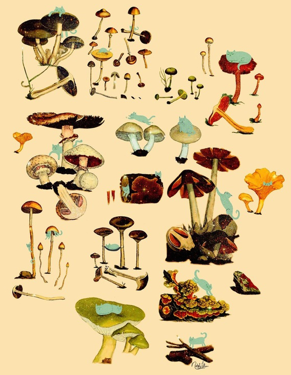 Aaryn West - Trends: Magic Mushrooms